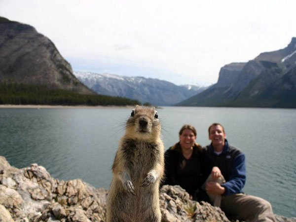 4-Squirrel-Photobomb