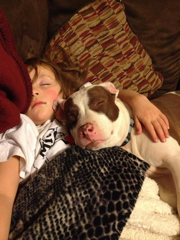 11 This pit bull who proves that pits