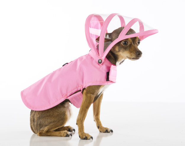 15. People may scoff at clothing for pets, but some pooches honestly prefer to stay dry they should be allowed to wear a rain coat without shame