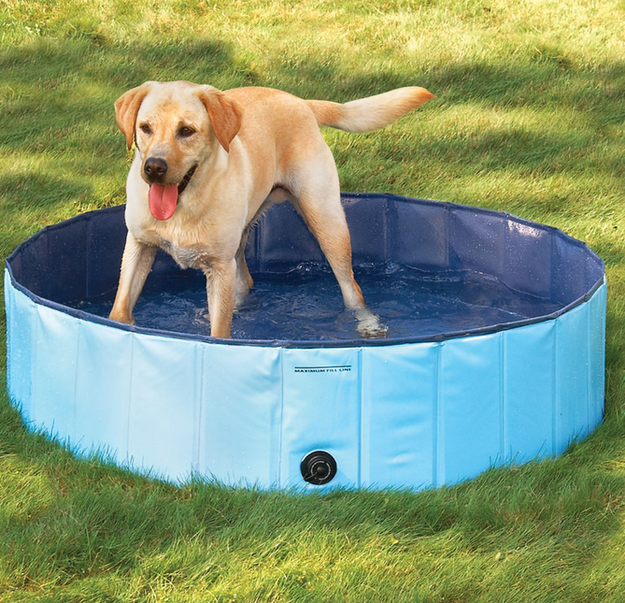 4. Is your dog too dirty to allow in your pristine pool Buy him one of his own.
