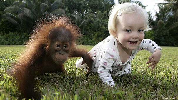 #6 Baby Orangutan Rishi And Emily The Copycat