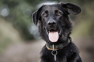 8. Tagg it's a GPS tracker that attaches to their collar