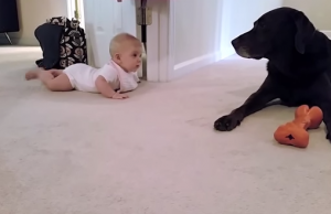 Baby's first crawl with her dog